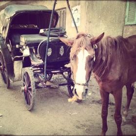 20121117-182232.jpg